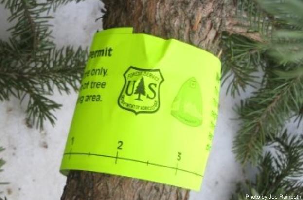 first christmas tree623