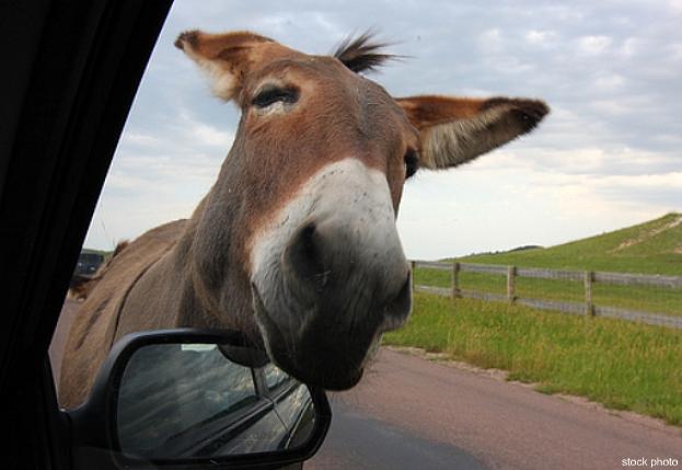 burro623