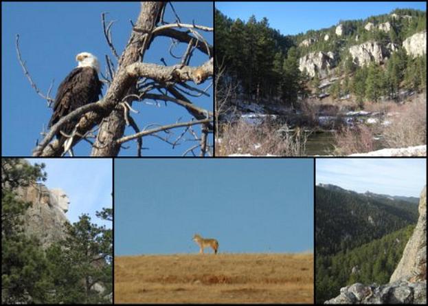Black Hills November623