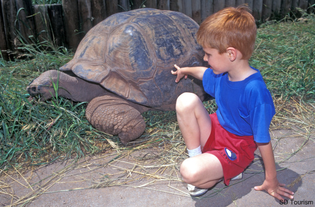 giant tortoise623