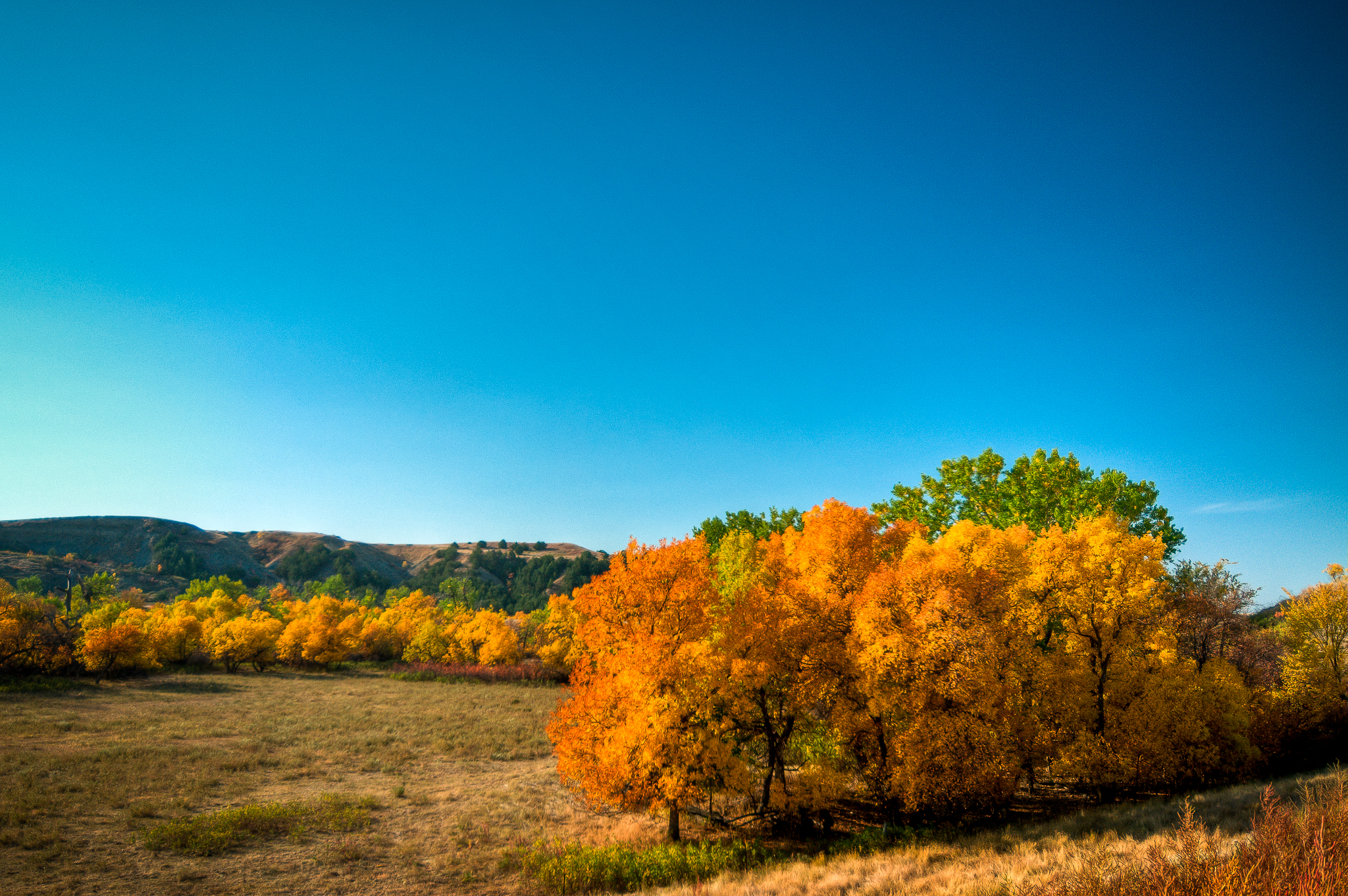 Fall In The Black Hills Four Reasons To Visit Black