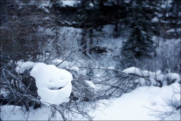 This friendly fellow greeted us as we snowshoed along Iron Creek.