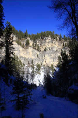 The drastic color differences of the snow, sky, shadows and vegetation along Iron Creek.
