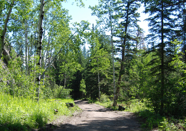 Trail in the Black Hills