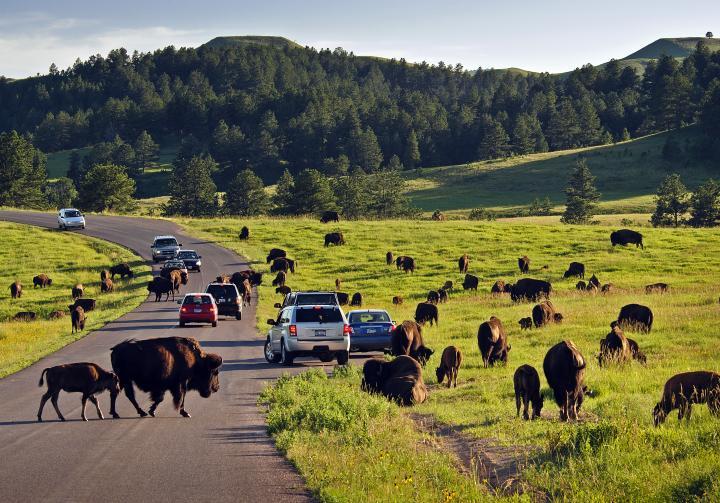 custer-state-park-650.jpg