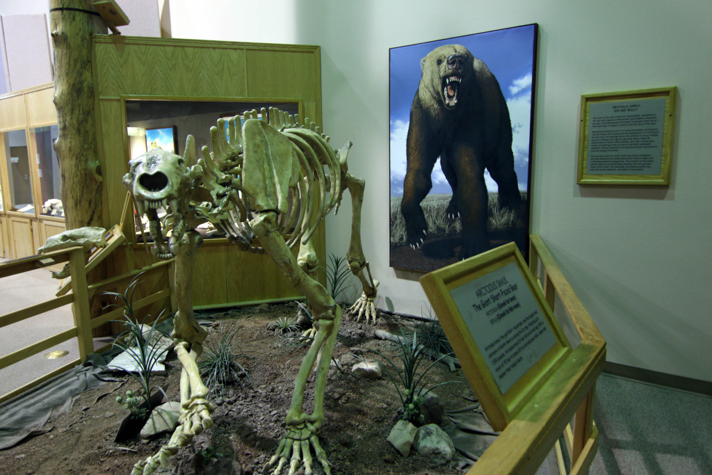 The short-faced bear can reach 16 feet into the air and weighed between 2000 - 2600 lbs.