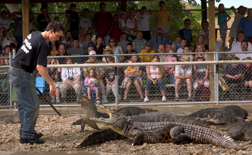 Reptile Gardens Life On The Wild Side Black Hills Travel Blog
