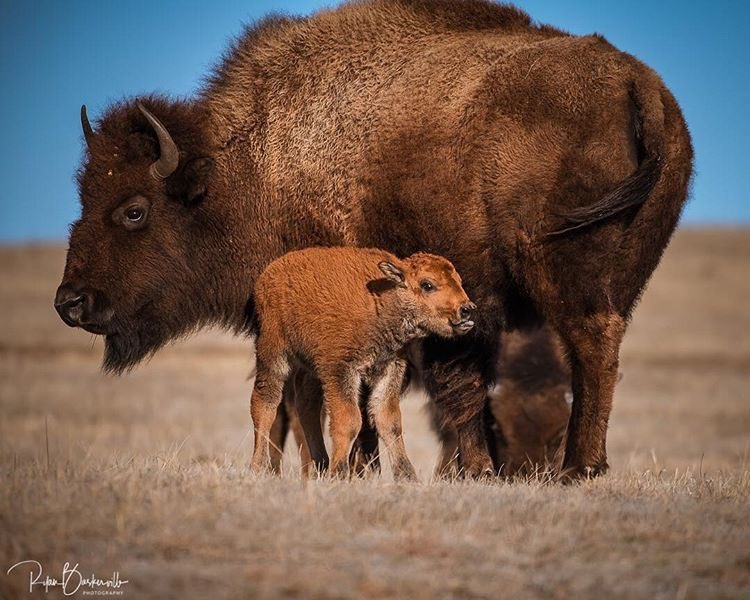 The 5 Most Remarkable Photos Of The Black Hills In April