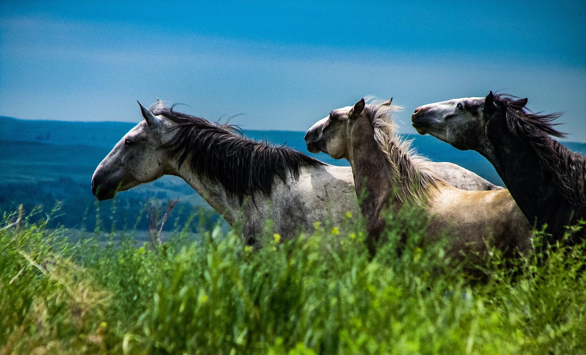 Spirit Of The Southern Hills At The Black Hills Wild Horse Sanctuary Fan Photofridayblack Hills Badlands South Dakota