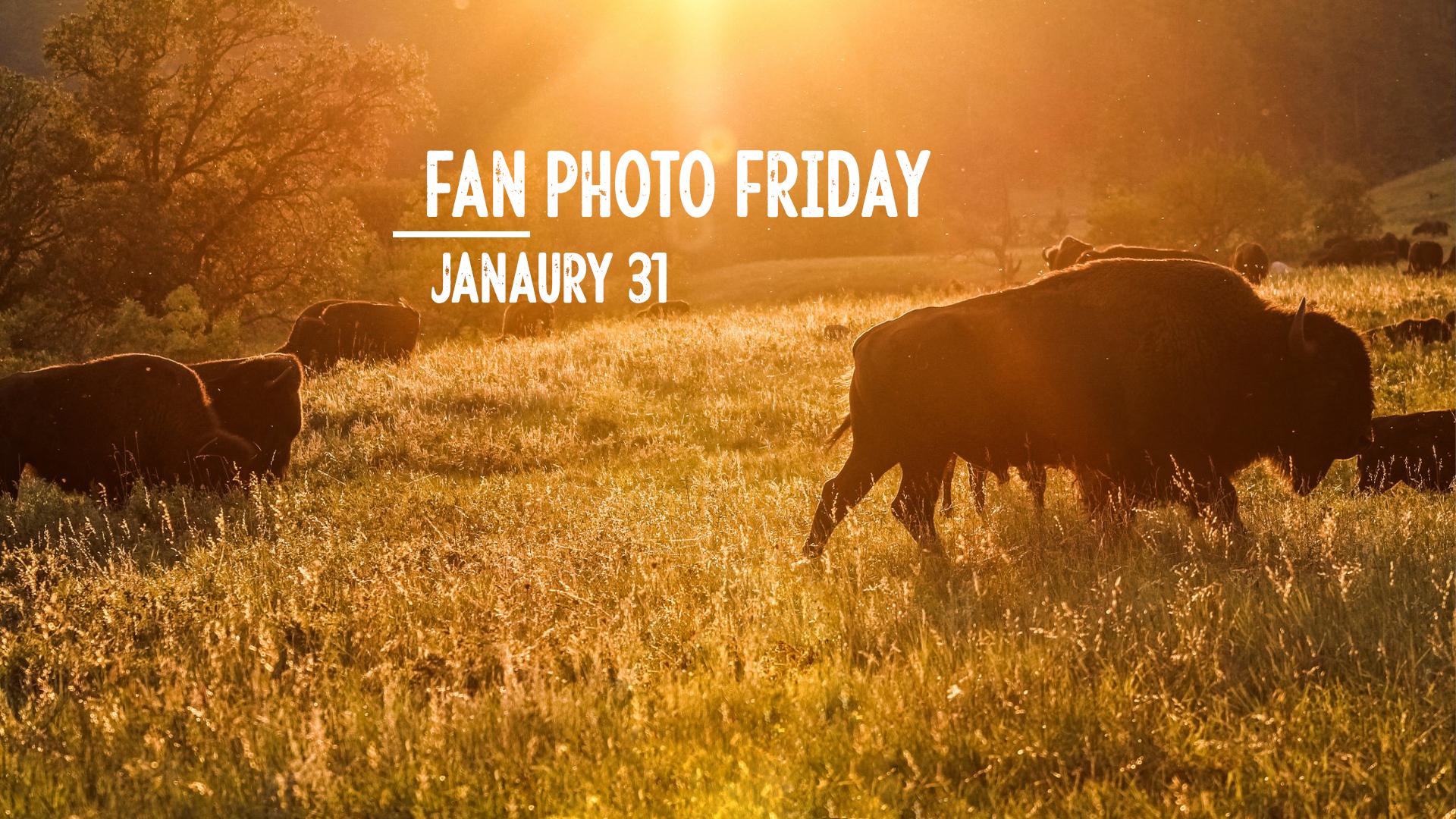 Fan Photo Friday   Jan. 31, 2020