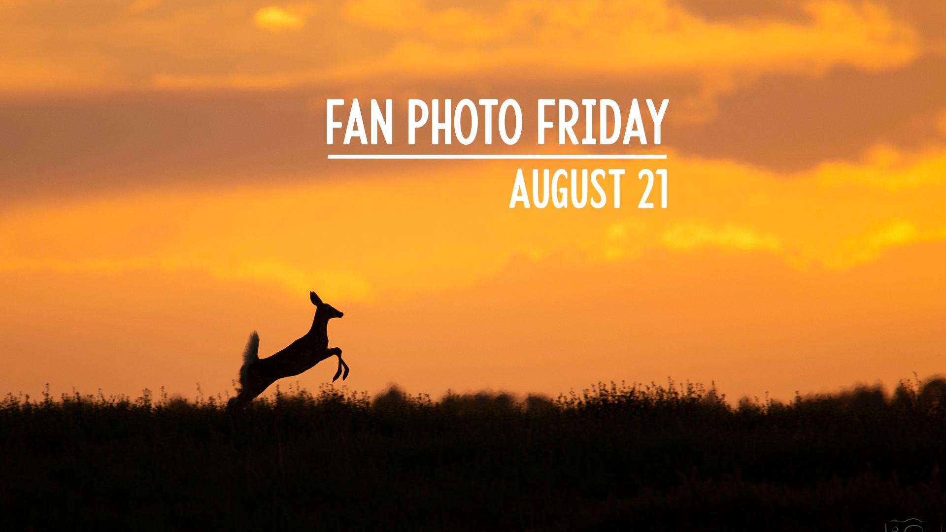 Fan Photo Friday   August 21, 2020