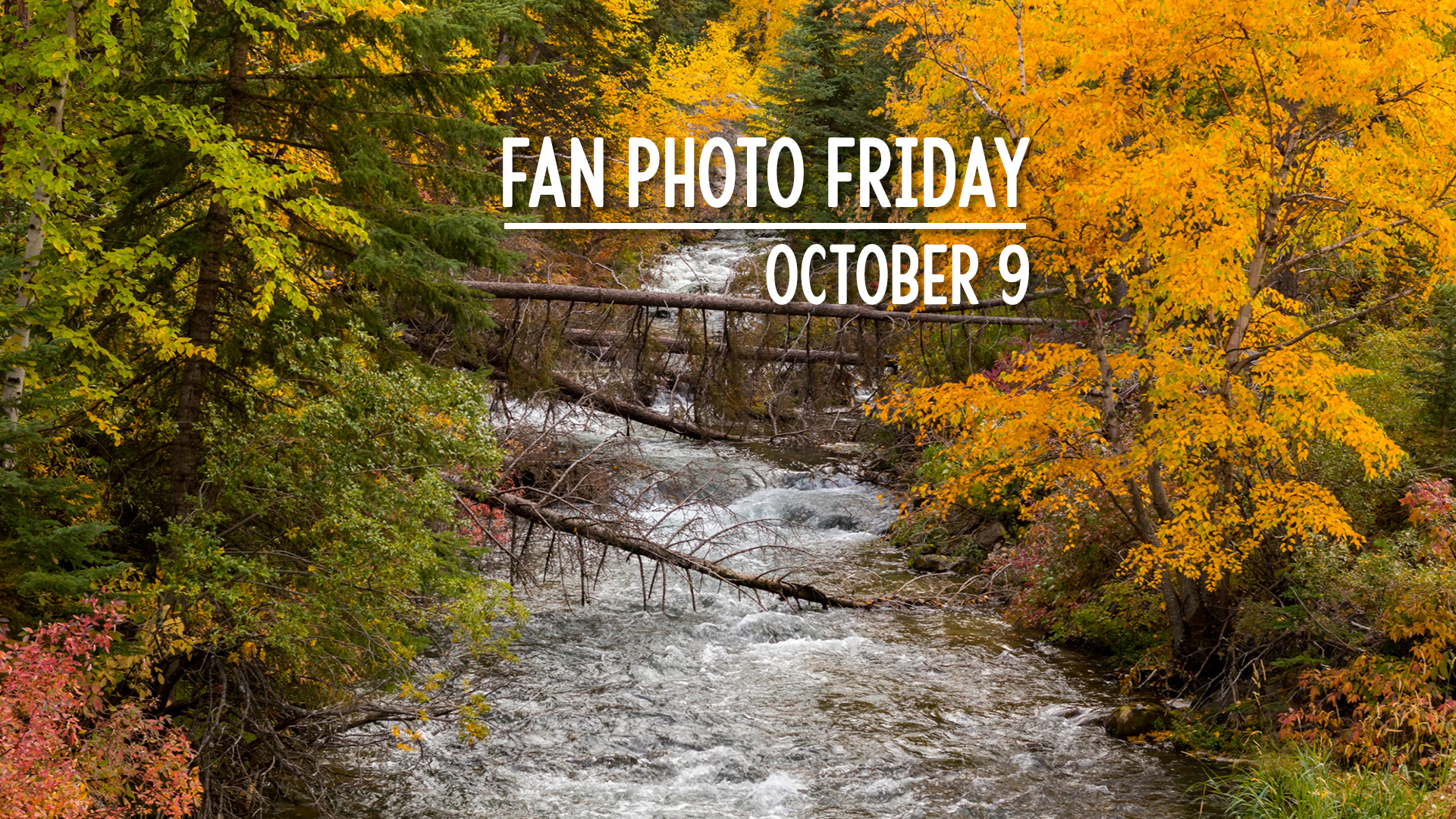 Fan Photo Friday | October 9, 2020