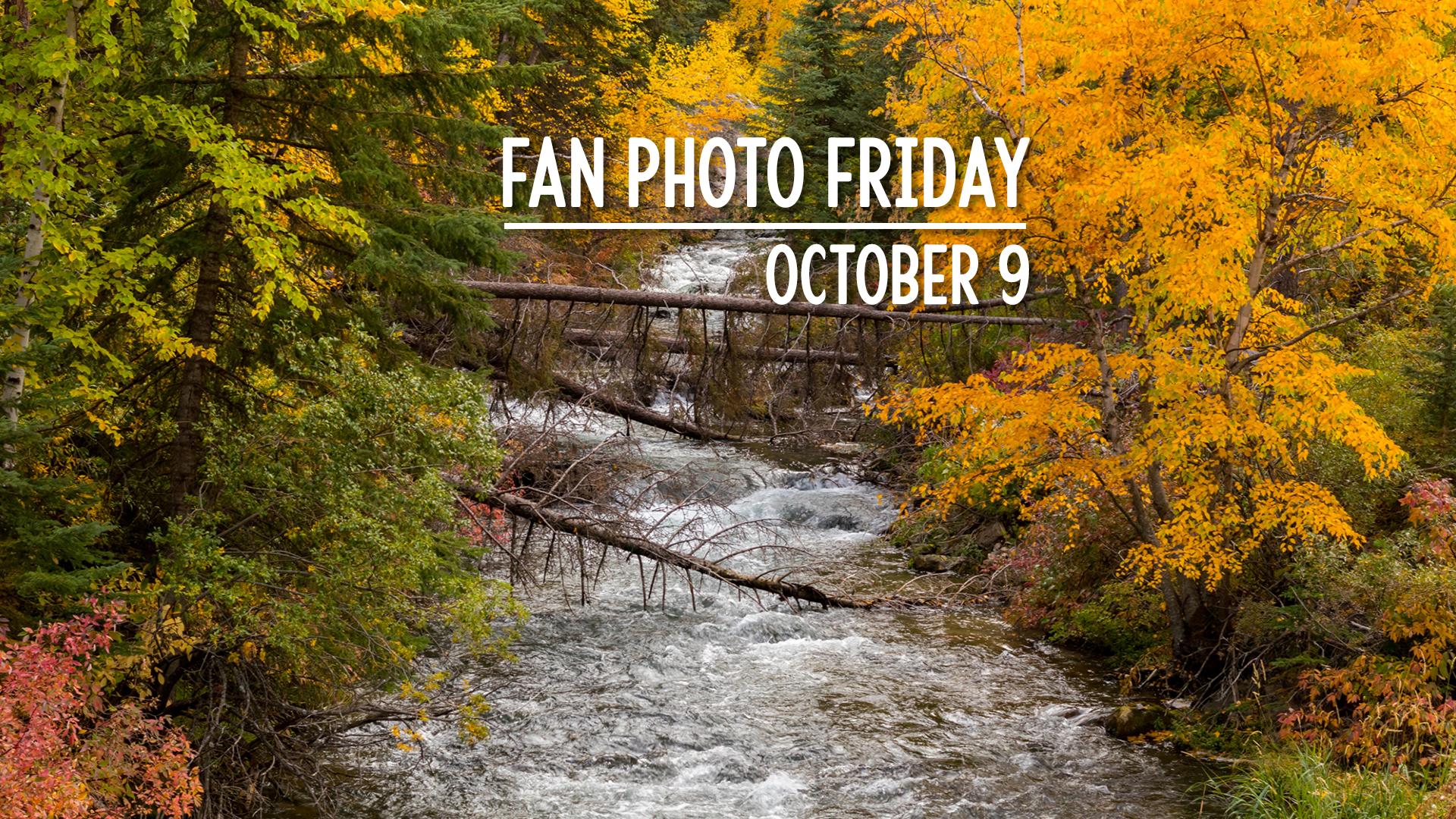 Fan Photo Friday   October 9, 2020