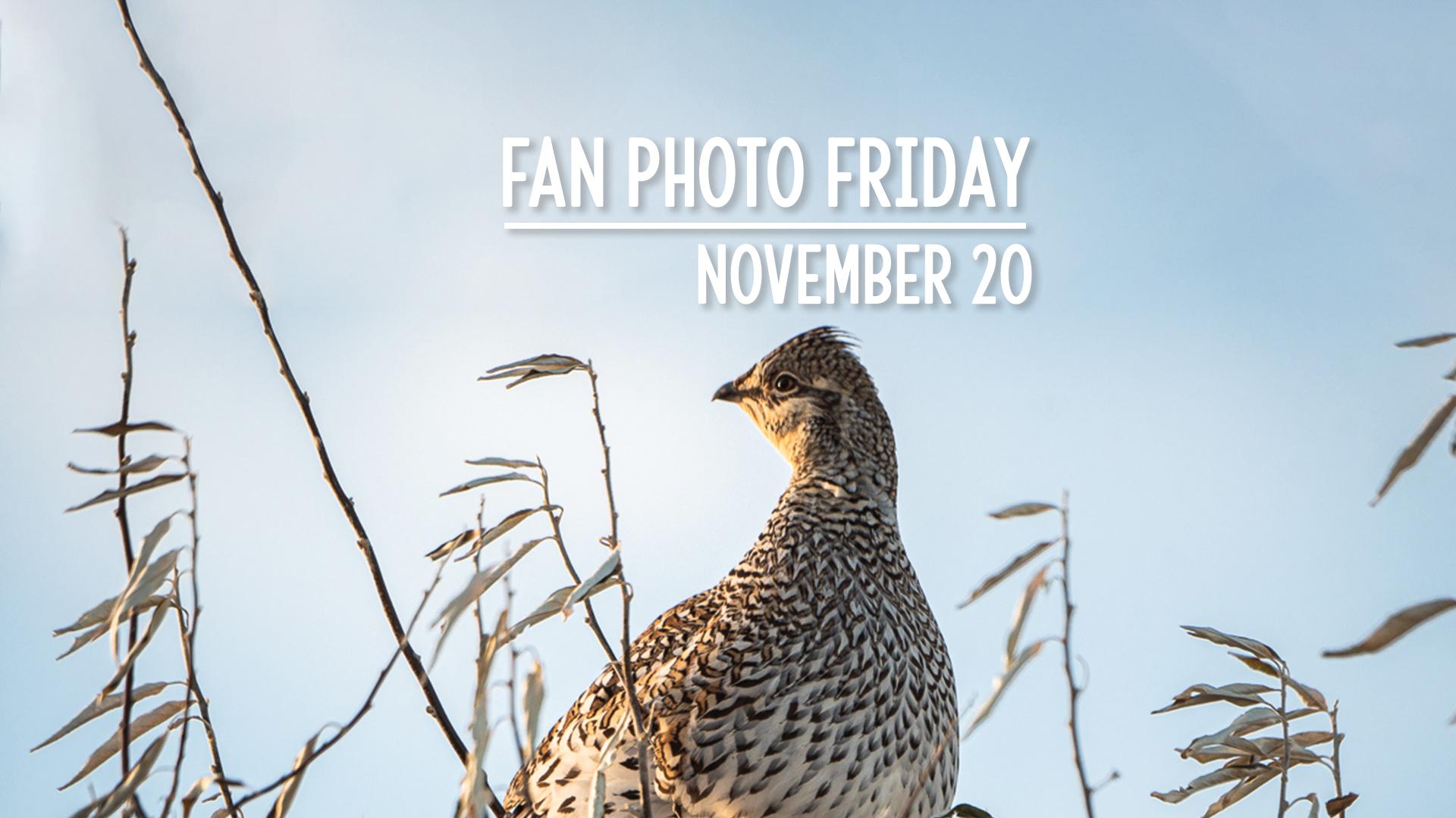 Fan Photo Friday   November 20, 2020
