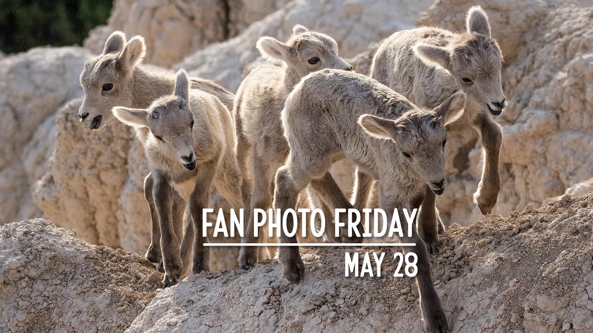 Fan Photo Friday | May 28, 2021