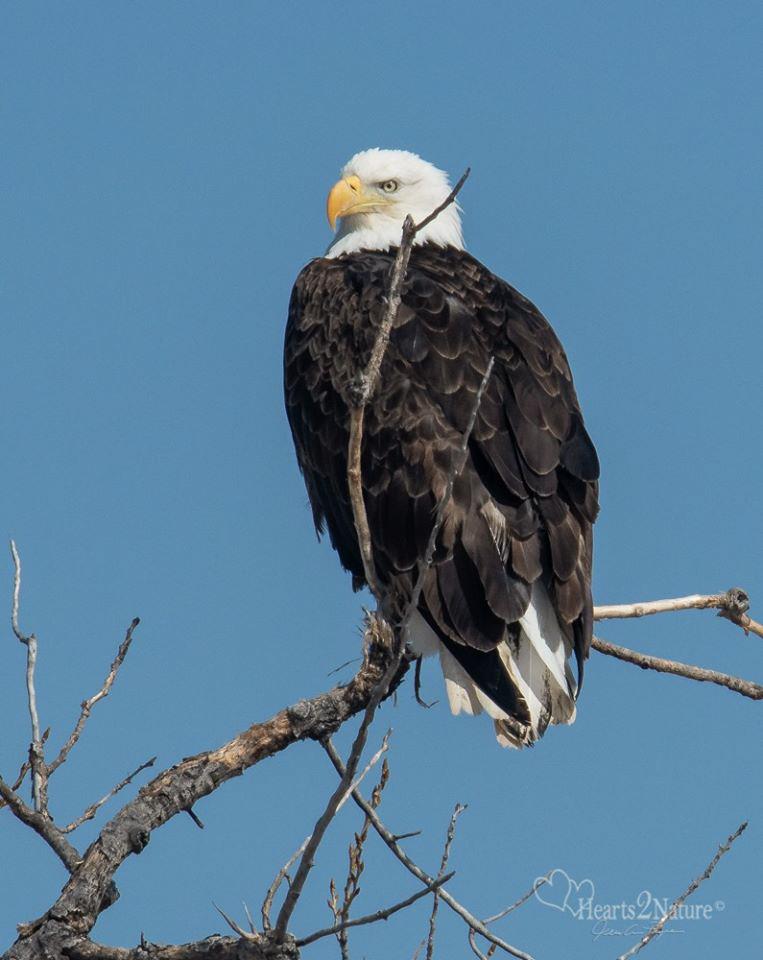 Happy Eagle