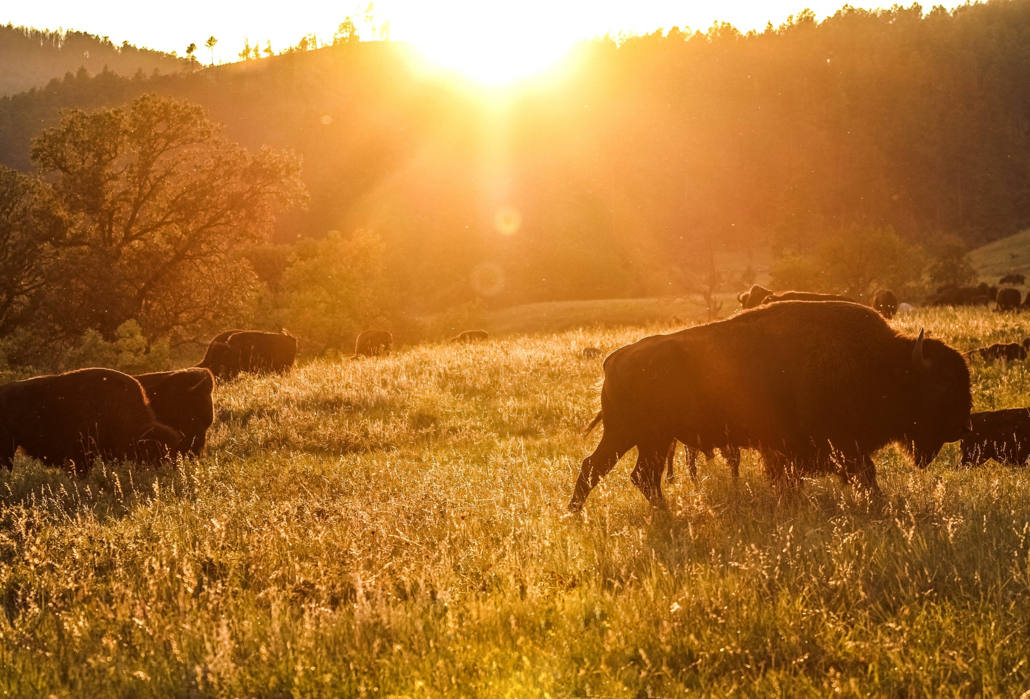 Golden Hour in Custer State Park