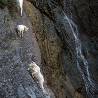 Canyon Sightseers