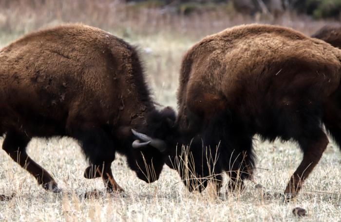 Prairie Rumble