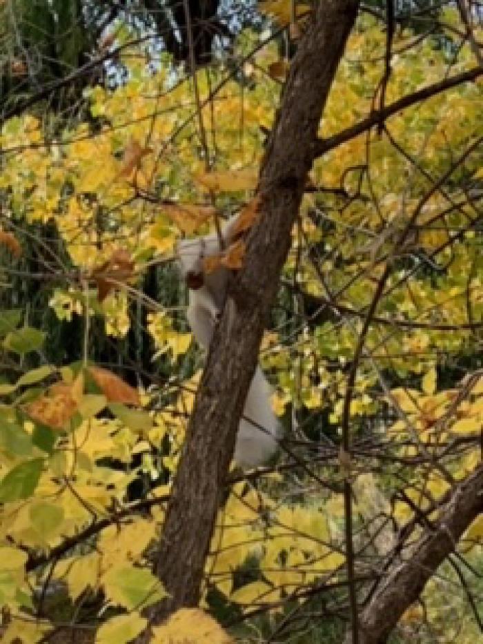 Albino Squirrel at Meadowbrook Golf Course