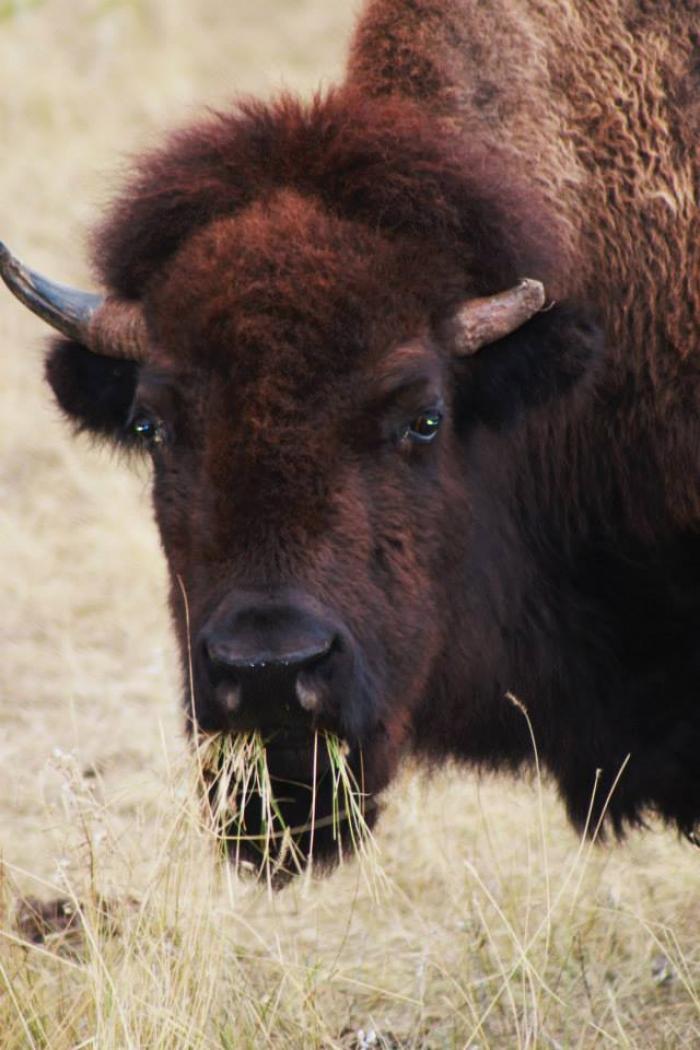 Custer Roundup