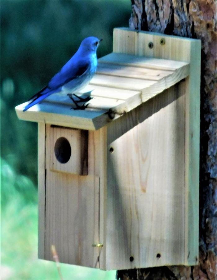 Blue Bird Are Here