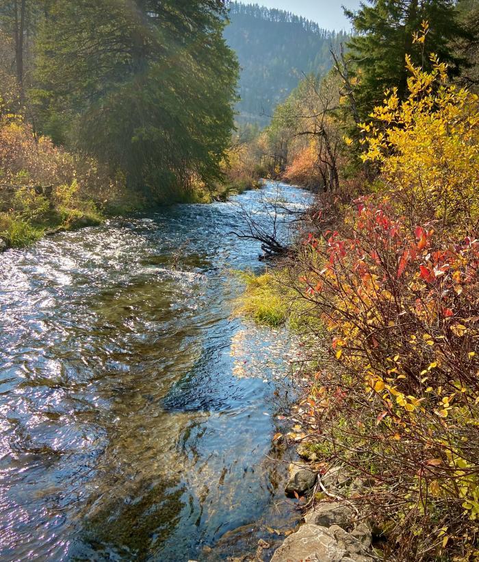 Autumn Stream Vibrance