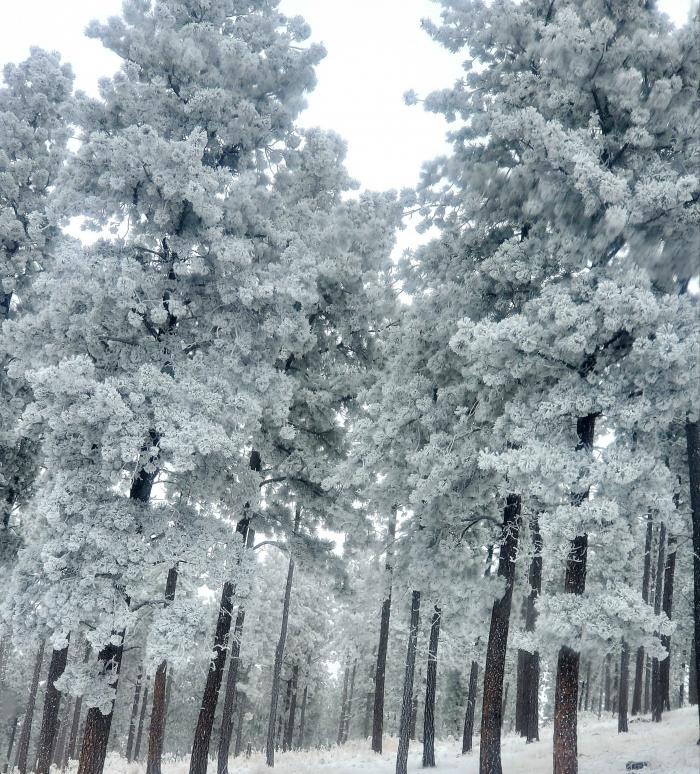 Winter Wonderland in Custer