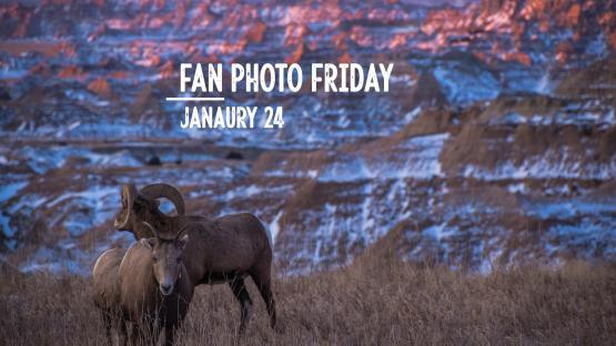 Fan Photo Friday | Jan. 24, 2020