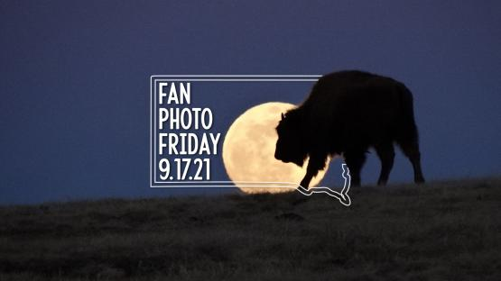 Fan Photo Friday | Sept. 17, 2021