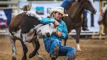 Buffalo Stampede Rodeo