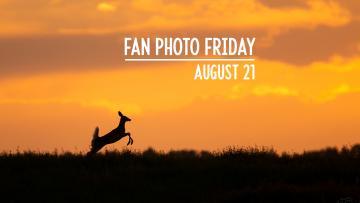 Fan Photo Friday | August 21, 2020