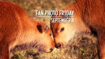 Fan Photo Friday | September 4, 2020