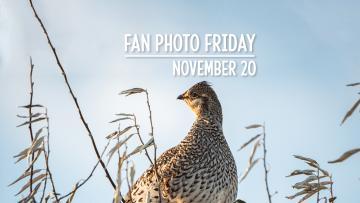 Fan Photo Friday | November 20, 2020