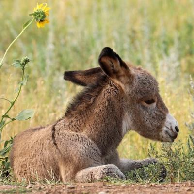 Baby Donkey in CSP