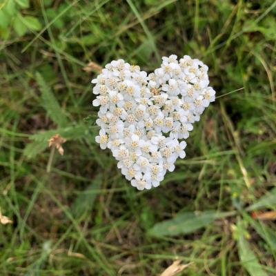 Sending Hearts from Nature