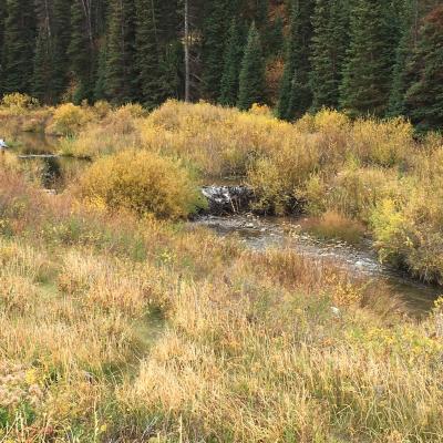 Beaver Dam on Trout Stream