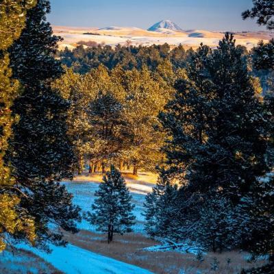 Bear Butte Thru the Pines