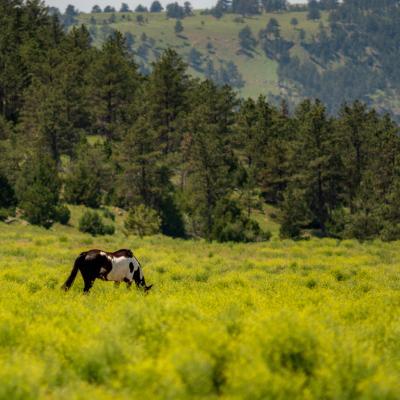 Horse Heaven in the Black Hills