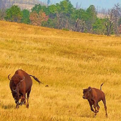 Running to Meet the Herd
