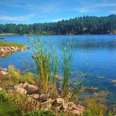 Summer at Stockade Lake