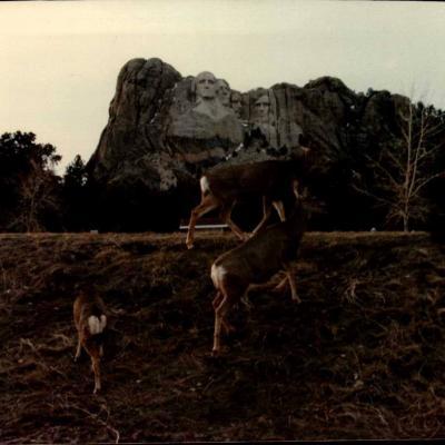 Wild Mount Rushmore