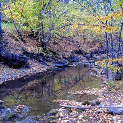 Peace at Little Elk Creek
