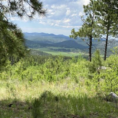Boulder Mt  - Meadow view