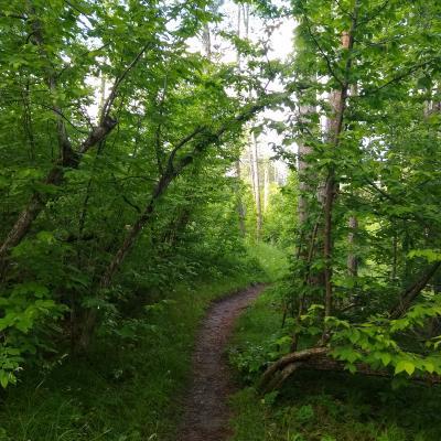 Tinton Trail