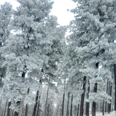 Winter Wonderland in Custer