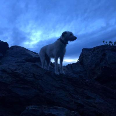 Black Hills Night Sky