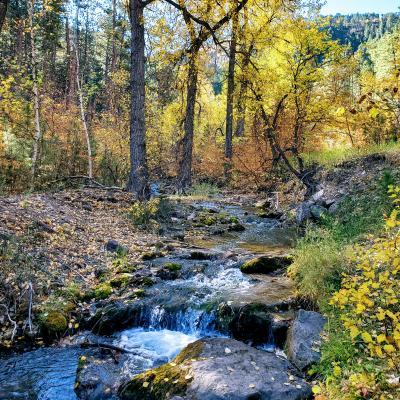 Little Elk Creek Autumn