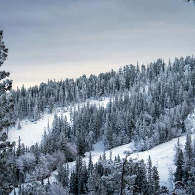 Frosty Terry Peak Ski Resort