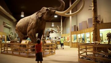 Fossils, Minerals & Prehistoric Wonders